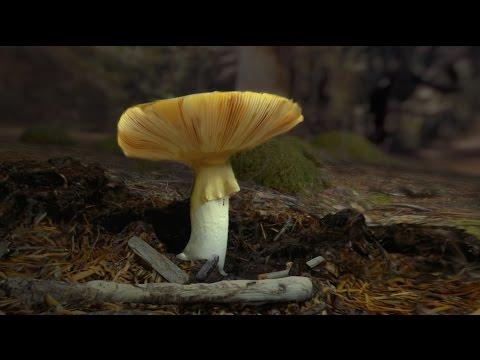 Habitat Earth HD (Educator Version) | California Academy of Sciences thumbnail