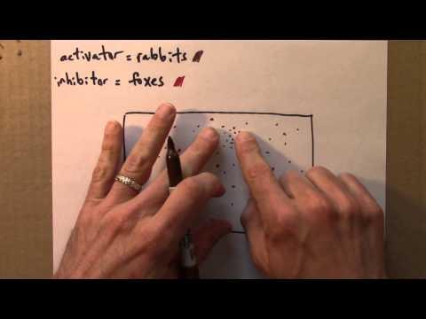 Chaos 9.2 Reaction-Diffusion Equations (2) thumbnail