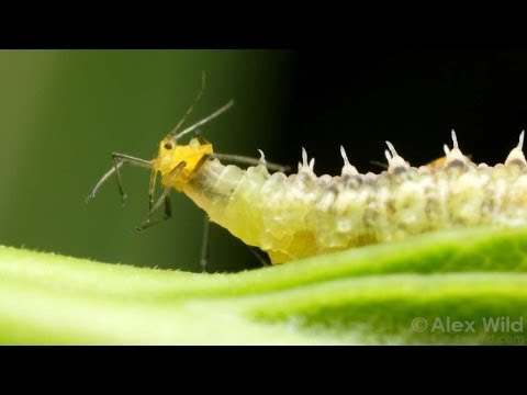 The Short Brutish Life of Insects - Best of the Blogs #10 thumbnail