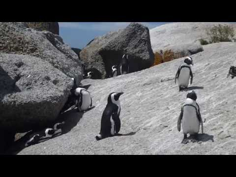 Science Today: Saving Animals from Extinction   California Academy of Sciences thumbnail