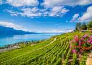 Lavaux Terraced Vineyard
