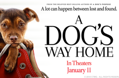 A Dogs Way Home Movie Poster 2019
