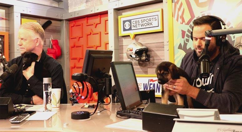 Boomer and Gio with puppies