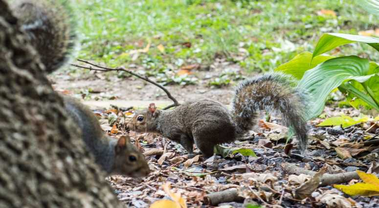 A squirrel in Central Park