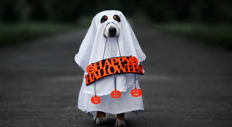 A dog in a Halloween costume.