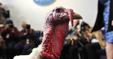 A live turkey is brought into the James S. Brady Press Briefing Room before the media at the White House, Tuesday, Nov. 20, 2018.