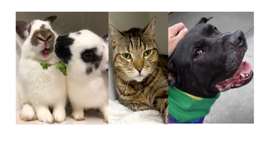 3 To See At ACC: Well, actually four this week! Meet Silvio, Champ and bonded bunnies Chamomile and Concetta