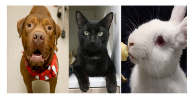 3 To See At ACC: meet Red, Trinidad and Peeps
