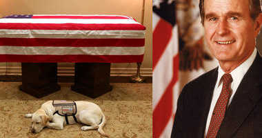 Sully the service dog serves President George H.W. Bush to the end