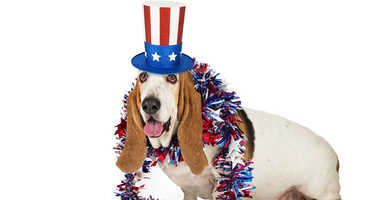 Fourth of July is a holiday fraught with danger for your furry and feathered friends.