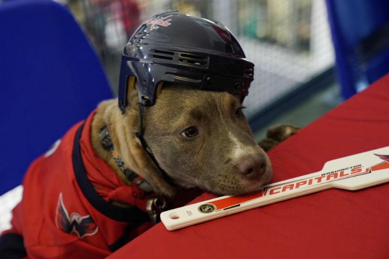 Peep the Pups of the Caps Puppy Playoffs!