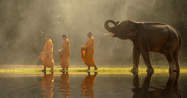 Thailand_Buddhist_monks_elephants