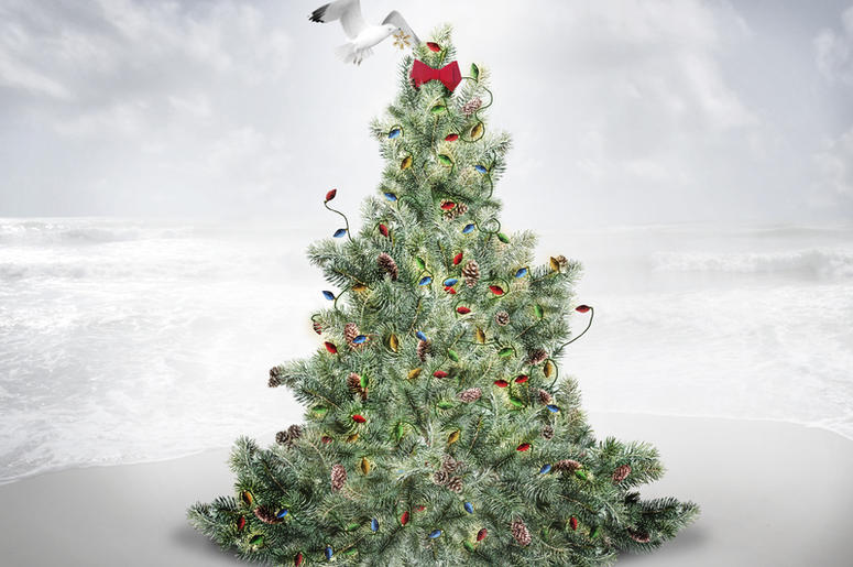 amazon will be selling and shipping live christmas trees this year - Amazon Com Christmas Trees