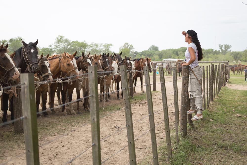 Gauchos en Fiesta de la Tradicion in San Antonio de Areco_234977527