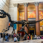 New York City Museum of Natural Sciences_376567660