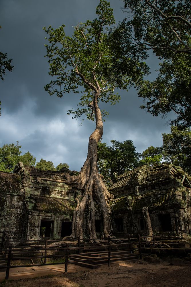 Angkor Wat Ta Pr ohm big tree temple_325420229