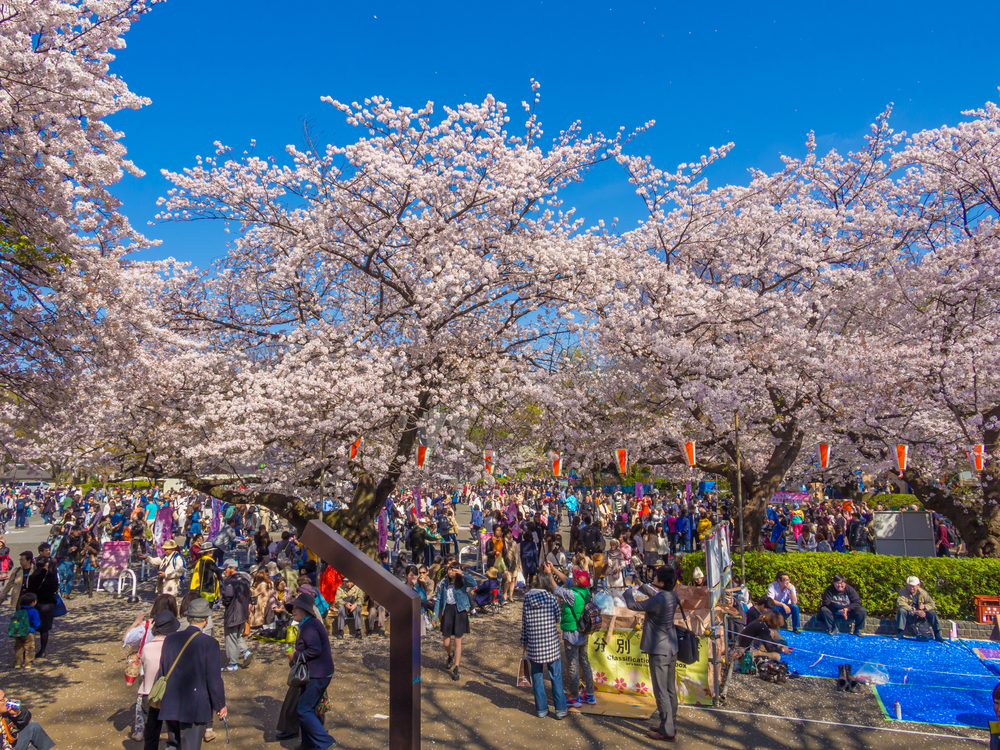 Cherry blossoms festival in Ueno Park_385433764