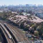 E2 Series bullet train and Cherry blossom trees_366522380