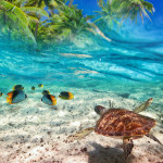 Green turtle swimming at tropical island of Caribbean Sea_166569026