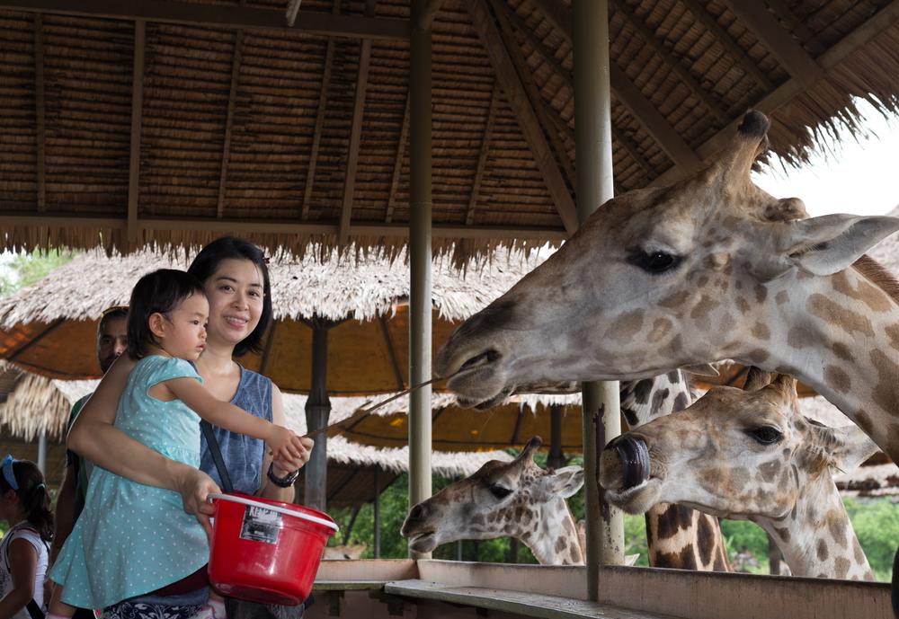 Safari World zoo_308324030