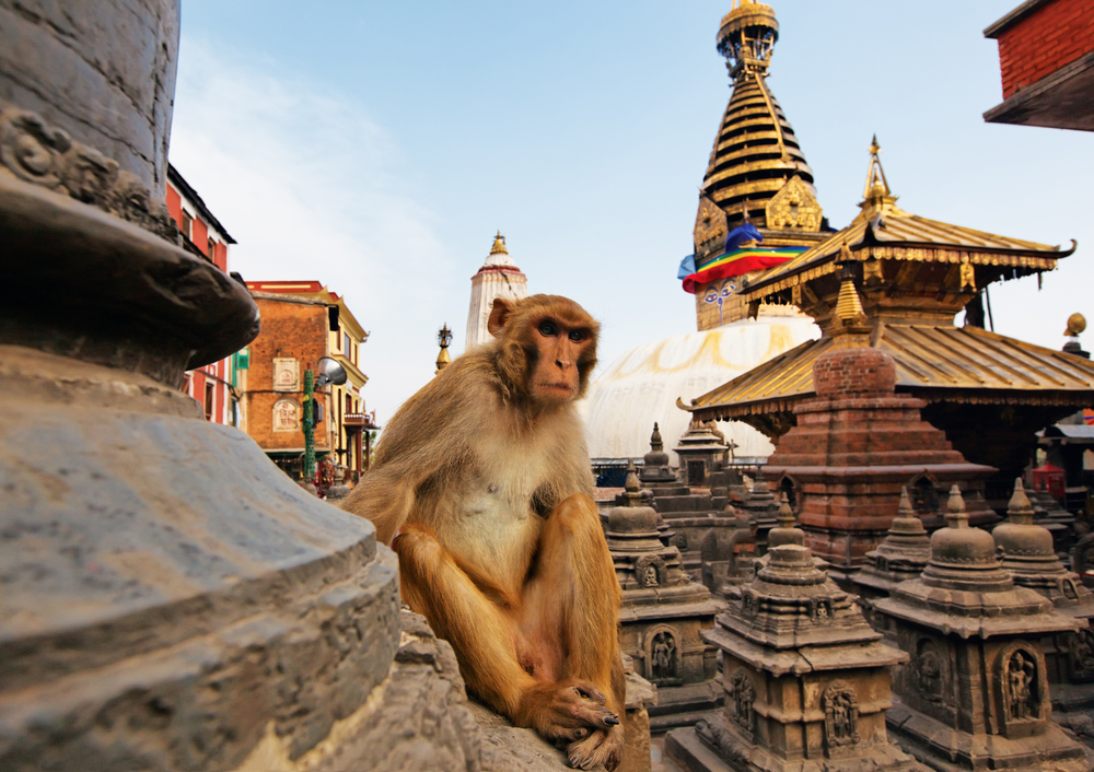 swayambhunath stupa in Kathmandu_67156744