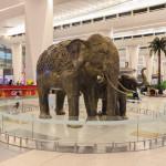 Elephants sculpture at Indira Gandhi International Airport_325902851