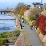 Kamo river in Kyoto_362761820