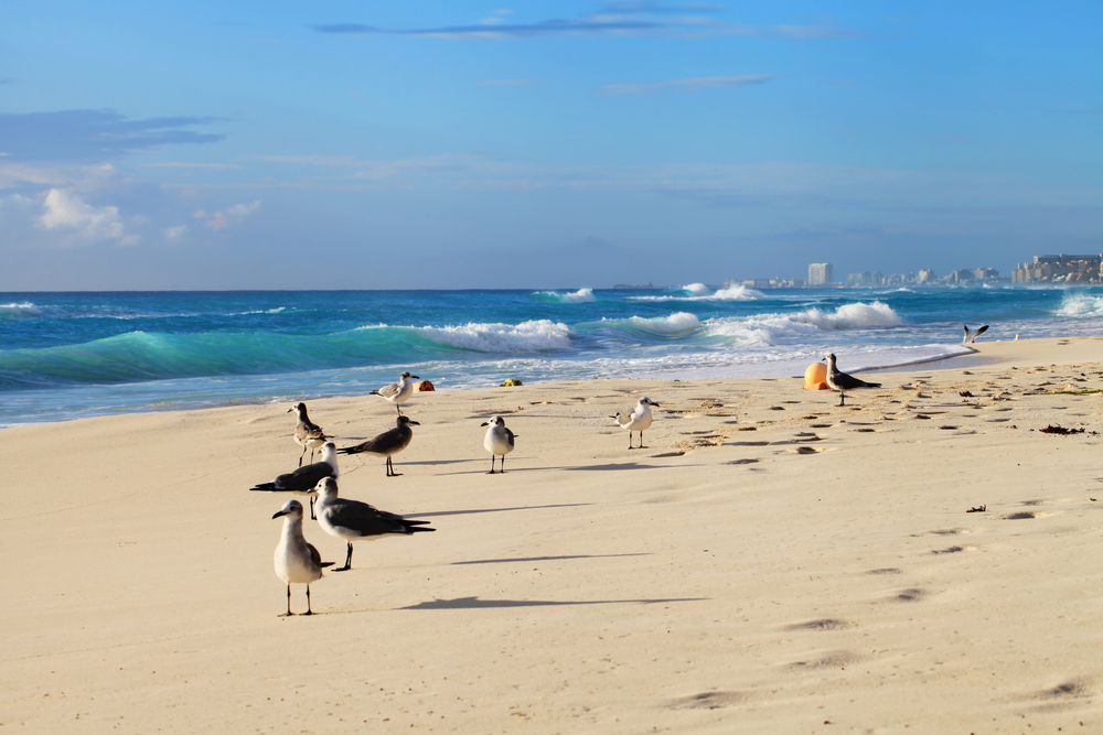 Gulls on the beach in Cancun_348948122