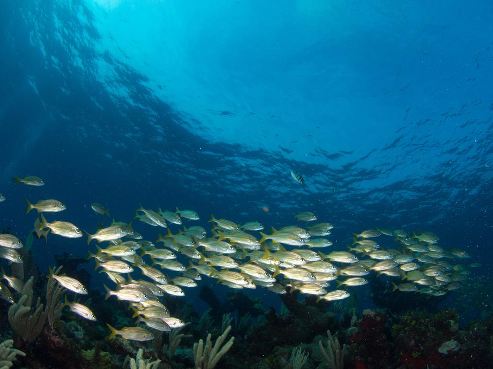 Isla Mujeres Cancun_357291038