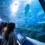 aquarium in Kuala Lumpur_235913044