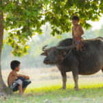 Rural way of life in Nakhon Ratchasima_329033714