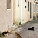 streets of greek village at Corfu_38447011