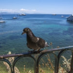 old city of Corfu, Corfu island, Greece_415302052