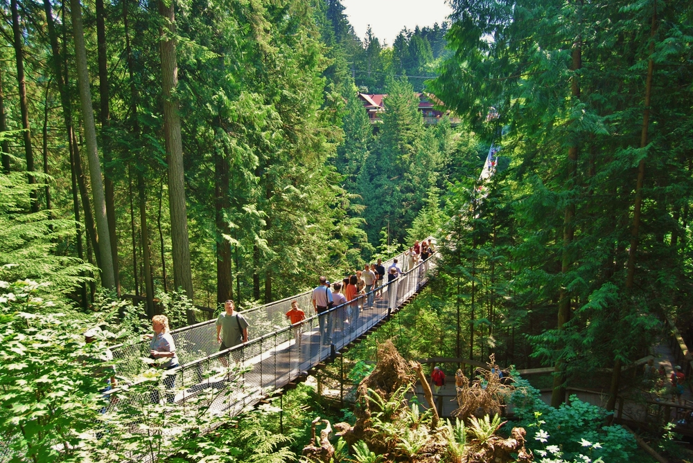 Capilano Bridge _133171784