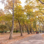 Park in Heroes Square, Budapest_385653016