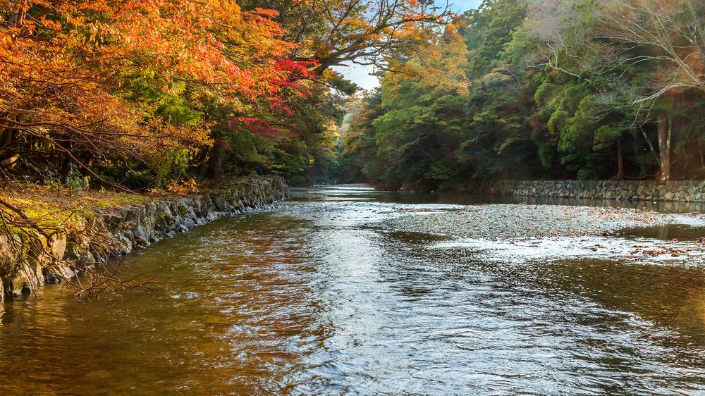 Isuzu river_416134366