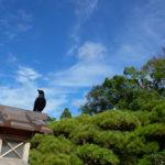 lantern in Ise shrine garden_331568990
