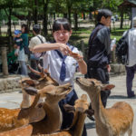 Japanese school girl feeds wild deer in Nara_399061168