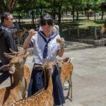 Japanese school girl feeds wild deer in Nara_399061150