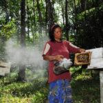 local bee farm in Kudat_217167481