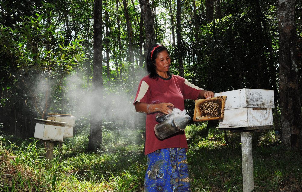 local bee farm in Kudat_217167481