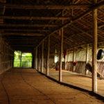 Rungus live in longhouses_381977407