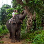 an elephant in Pinnewala, Sri Lanka_142271503