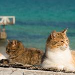 cat on the Black Sea in Odessa_410184631
