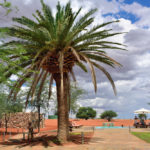 Bagatelle Kalahari Game Ranch_389214805