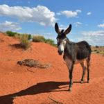 Donkey in the Kalahari desert at sun down_422567641