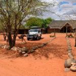 Bagatelle Kalahari Game Ranch_389214802