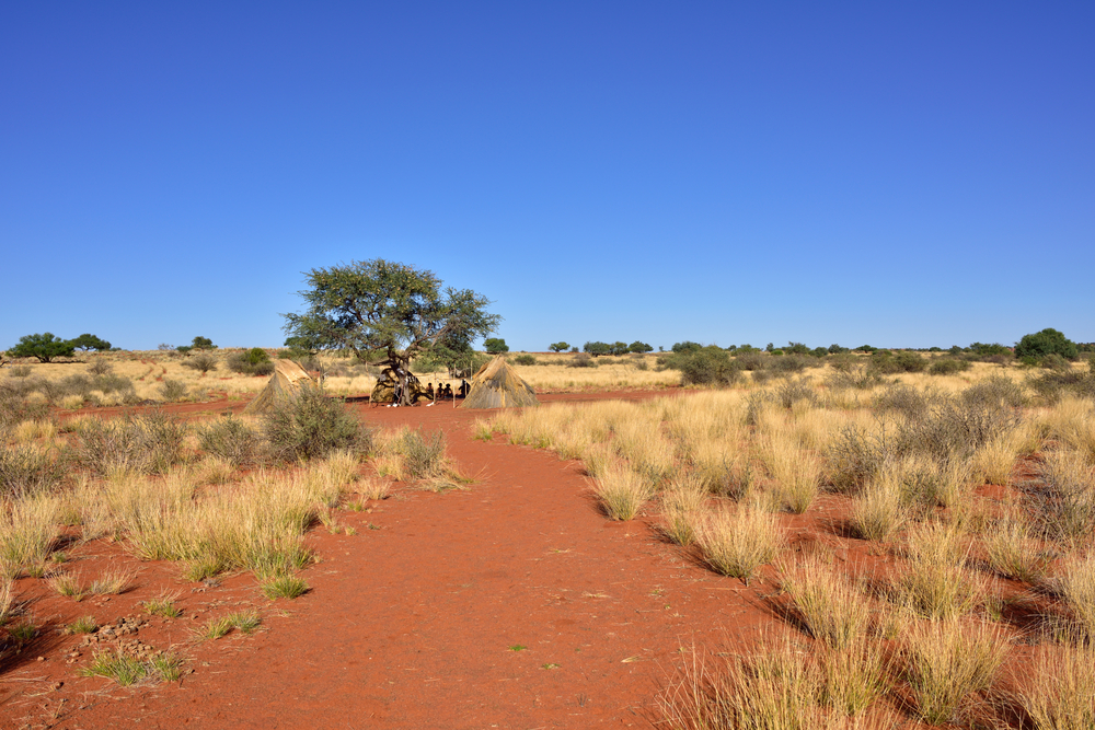beautiful Kalahari desert landscape with bushmen village_384849067