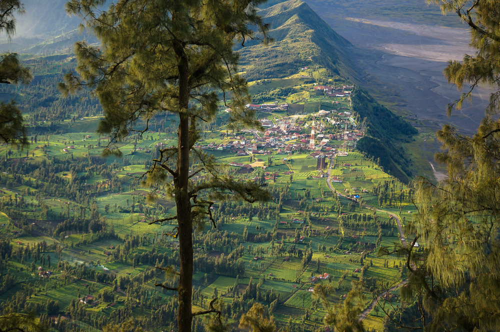 Cemoro lawang village at mount Bromo_411392947