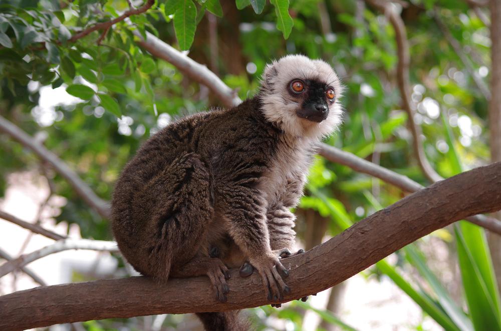 Monkey park, Tenerife_416490952